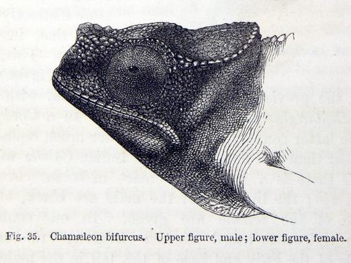 Image of Darwin-F937.2-1871-zzzz-det-035-2