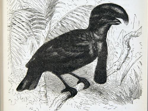 Image of Darwin-F937.2-1871-zzzz-det-059