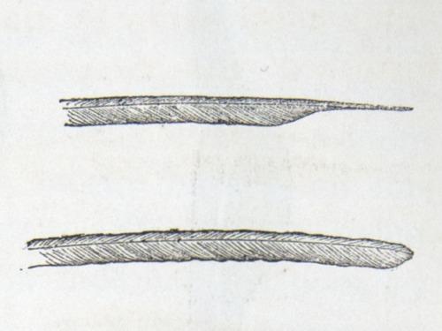 Image of Darwin-F937.2-1871-zzzz-det-065