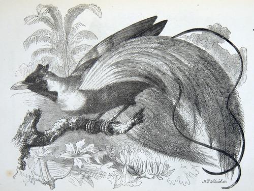 Image of Darwin-F937.2-1871-zzzz-det-075