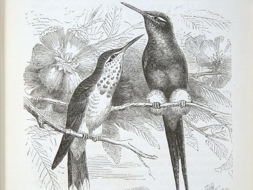 Image of Darwin-F937.2-1871-zzzz-det-077