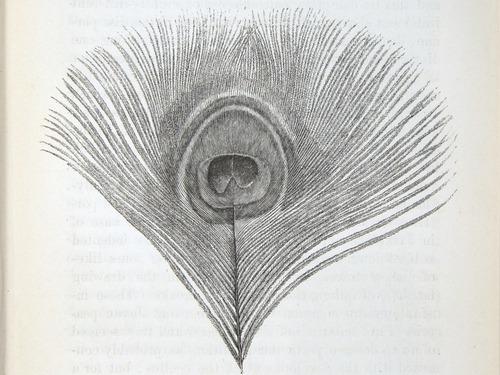 Image of Darwin-F937.2-1871-zzzz-det-137