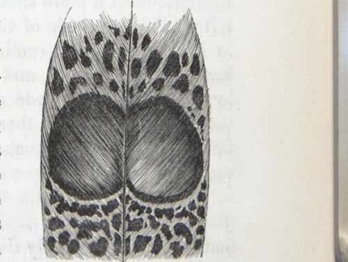 Image of Darwin-F937.2-1871-zzzz-det-139