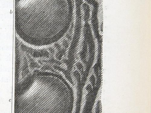 Image of Darwin-F937.2-1871-zzzz-det-149