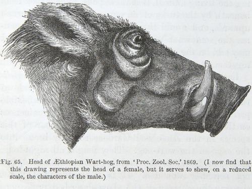 Image of Darwin-F937.2-1871-zzzz-det-265