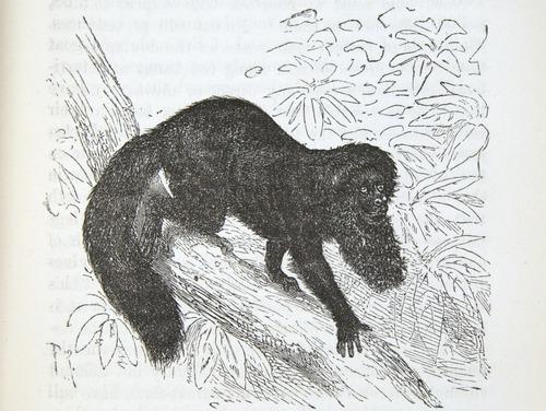 Image of Darwin-F937.2-1871-zzzz-det-283