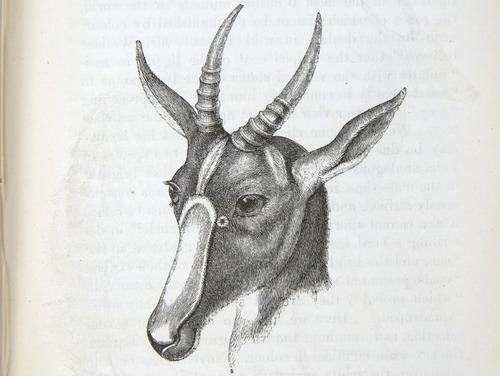 Image of Darwin-F937.2-1871-zzzz-det-301