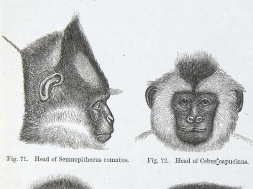 Image of Darwin-F937.2-1871-zzzz-det-307-1