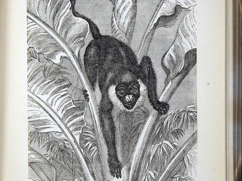 Image of Darwin-F937.2-1871-zzzz-det-309