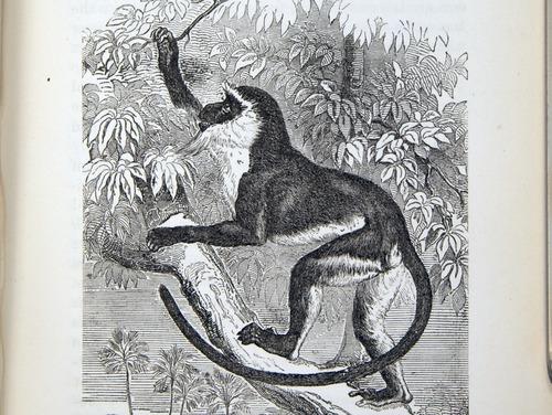 Image of Darwin-F937.2-1871-zzzz-det-311