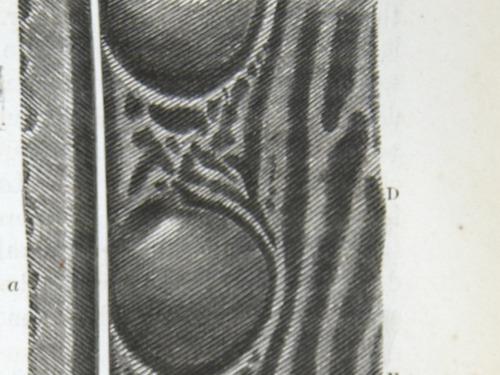 Image of Darwin-F937.2-1871-zzzz-det143