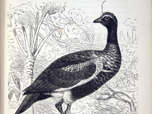 Image of Darwin-F937v2-1871-zzzz-det-047