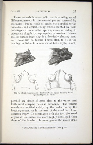 Image of Darwin-F937.2-1871-027
