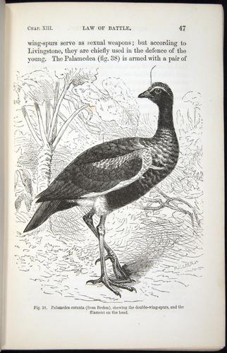 Image of Darwin-F937.2-1871-047