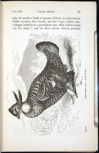 Image of Darwin-F937.2-1871-057