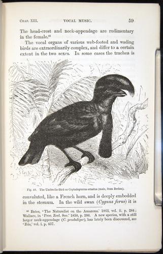 Image of Darwin-F937.2-1871-059