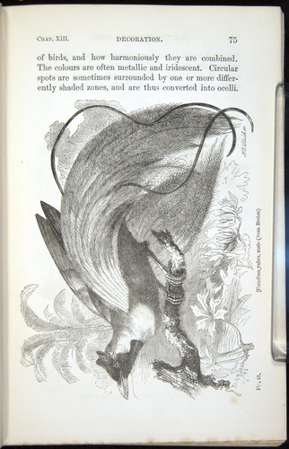 Image of Darwin-F937.2-1871-075