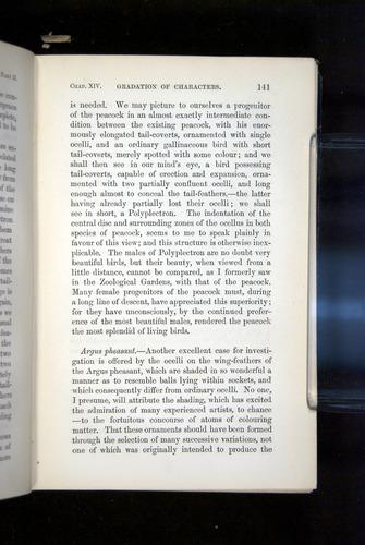 Image of Darwin-F937.2-1871-141