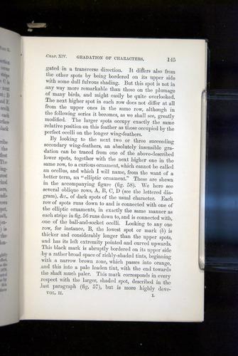 Image of Darwin-F937.2-1871-145