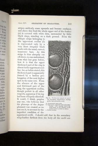 Image of Darwin-F937.2-1871-149