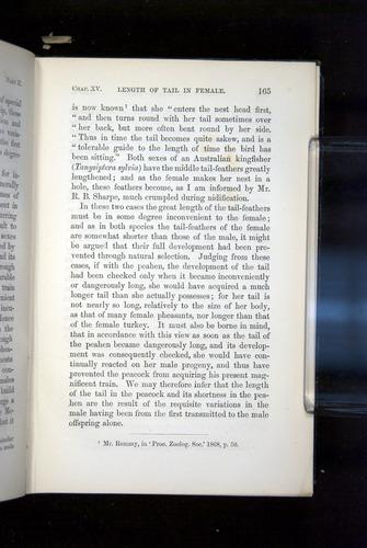 Image of Darwin-F937.2-1871-165