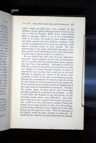 Image of Darwin-F937.2-1871-197