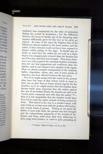 Image of Darwin-F937.2-1871-207