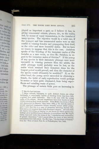 Image of Darwin-F937.2-1871-215