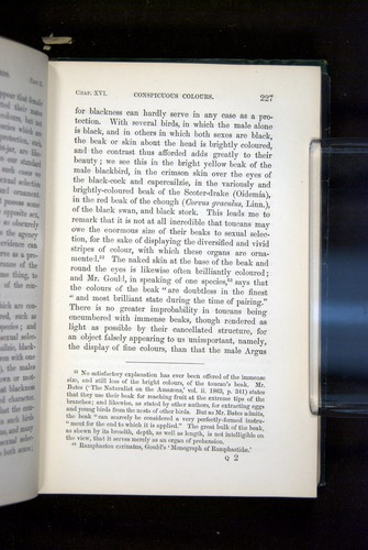 Image of Darwin-F937.2-1871-227