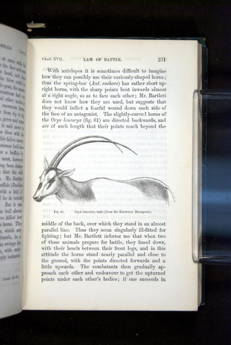Image of Darwin-F937.2-1871-251
