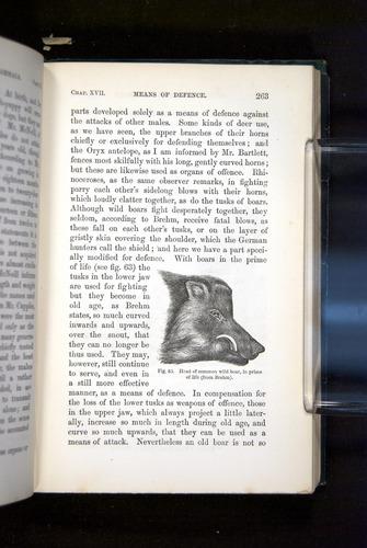 Image of Darwin-F937.2-1871-263