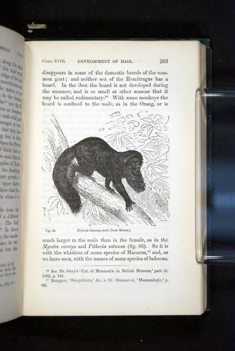 Image of Darwin-F937.2-1871-283