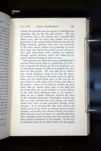 Image of Darwin-F937.2-1871-299