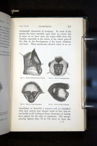 Image of Darwin-F937.2-1871-307
