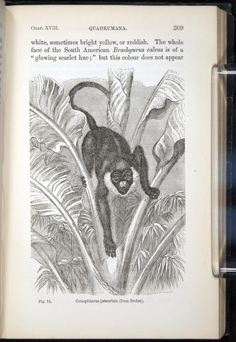 Image of Darwin-F937.2-1871-309