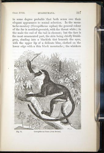 Image of Darwin-F937.2-1871-311