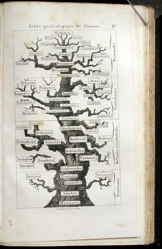 Image of Haeckel-1877-432-f11r