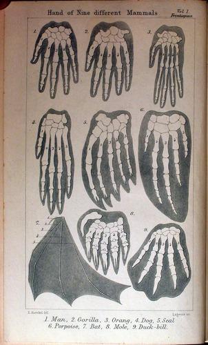 Image of Haeckel-1892-v1-fp