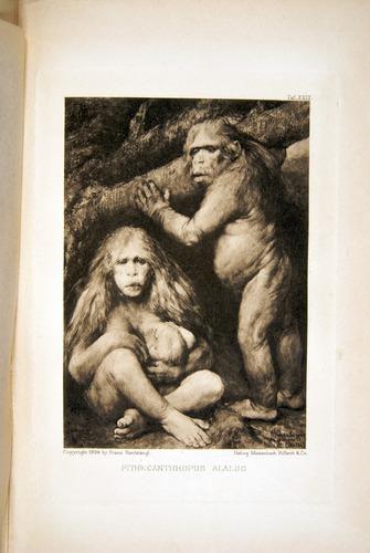 Image of Haeckel-1902-v1-36688