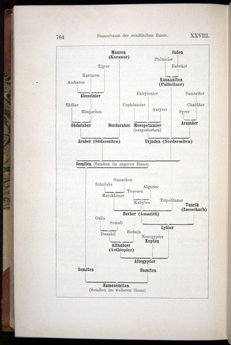 Image of Haeckel-1902-v1-36691