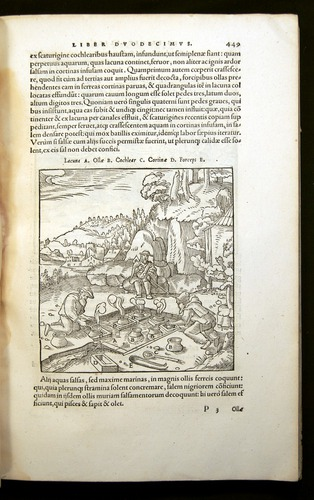 Image of Agricola-1556-449