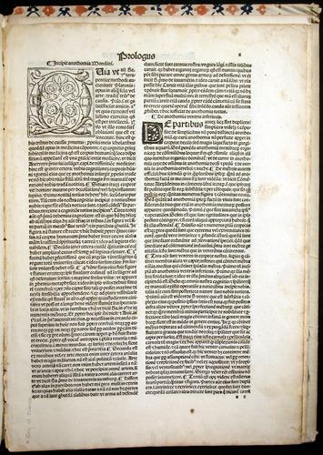 Image of MondinoDeiLuzzi-1507-002r