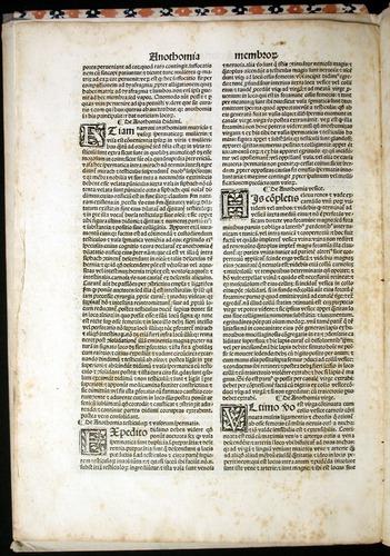 Image of MondinoDeiLuzzi-1507-006v