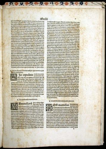 Image of MondinoDeiLuzzi-1507-007r
