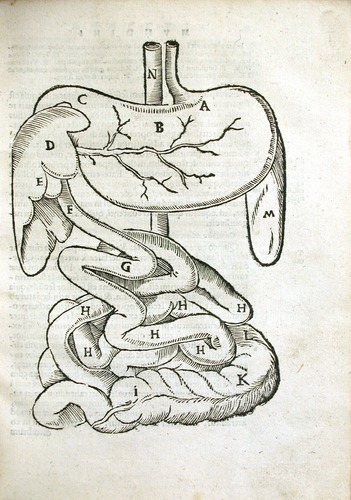 Image of MondinoDeiLuzzi-1541-e4r