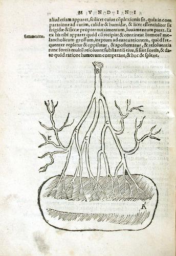 Image of MondinoDeiLuzzi-1541-f2v