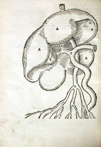Image of MondinoDeiLuzzi-1541-f4v