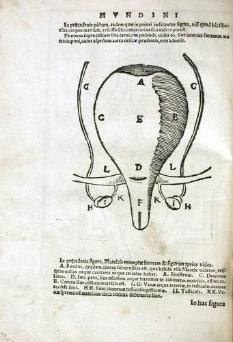Image of MondinoDeiLuzzi-1541-i3v