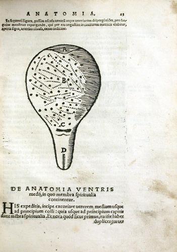 Image of MondinoDeiLuzzi-1541-i4r