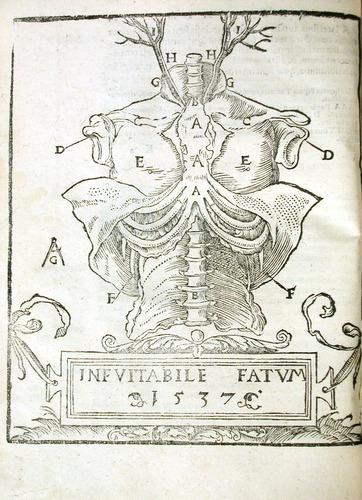 Image of MondinoDeiLuzzi-1541-k2v